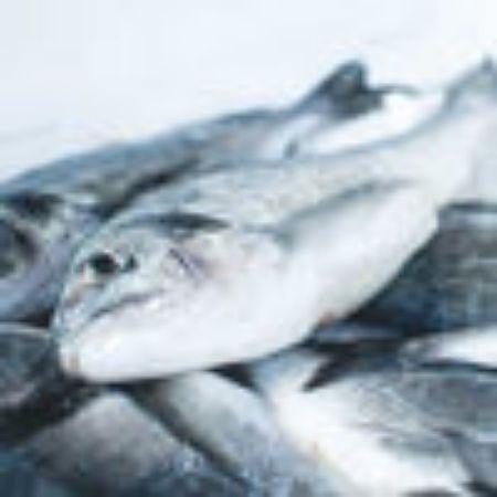 صورة لقسم سمكة طازج