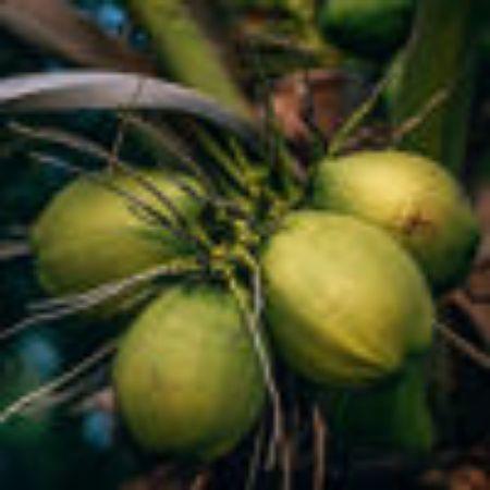 صورة لقسم جوز الهند الأخضر